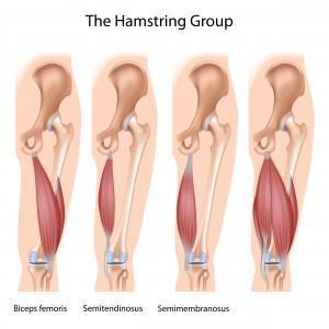 HAMSTRING-GROUP